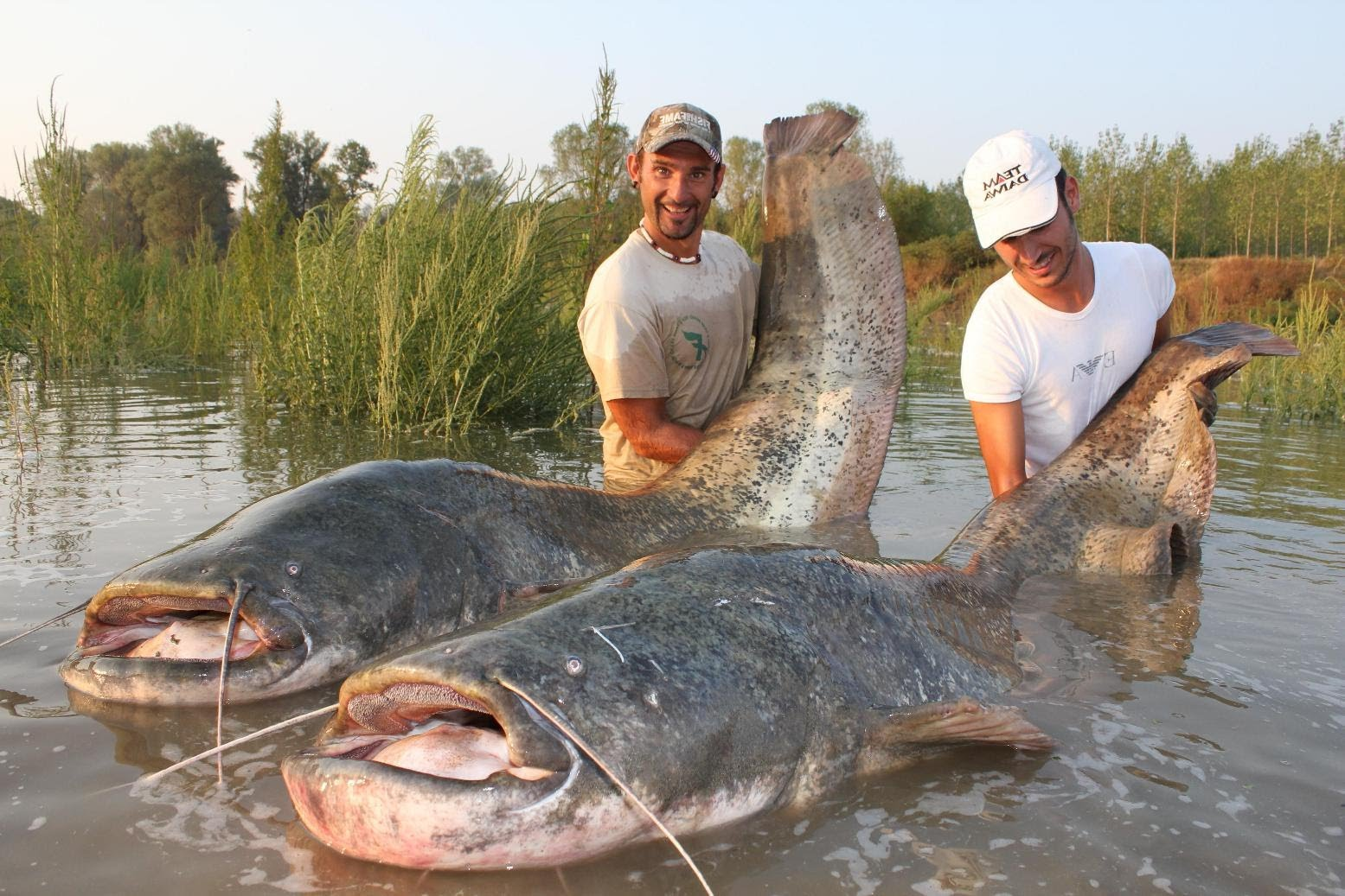 9 Stunning Facts about the Worlds Biggest Catfish Caught