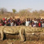 10 Biggest Crocodiles Ever Caught! They're Unbelievable!