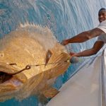 7 Biggest Goliath Groupers Ever Recorded